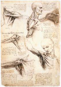 Leonardo_da_Vinci_-_Anatomical_studies_of_the_shoulder_-_WGA12824
